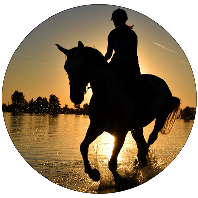 Horse Cleaning Testimonial Lydia H